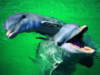 Delfines riendo Fotografias de delfines