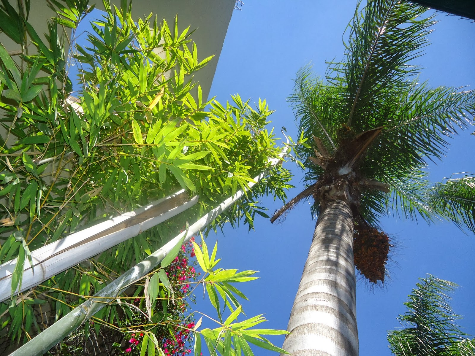 Sancarlosfortin llegando los vientos del sol de primavera en el jardin de marilu - El jardin del sol ...