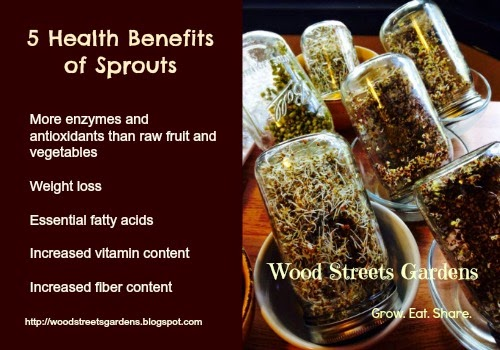 Sprouts are higher in essential nutrients than mature fruits and vegetables.