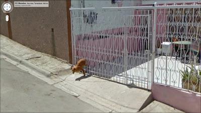 mitad de perro en street view