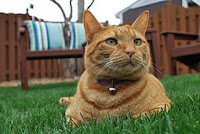 This is Hobbes, co-founder with Calle-cat of The Red Cat Society