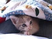 La pequeña Luly