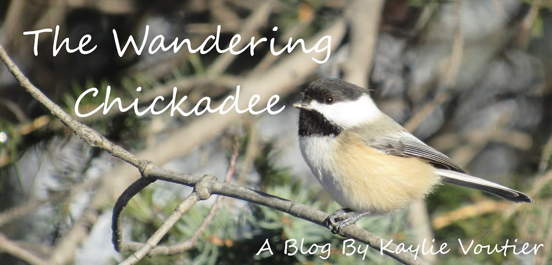 The Wandering Chickadee