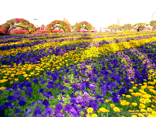 bed of flowers at Dubai Miracle Garden