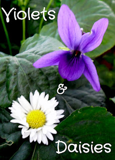 Violets and Daisies