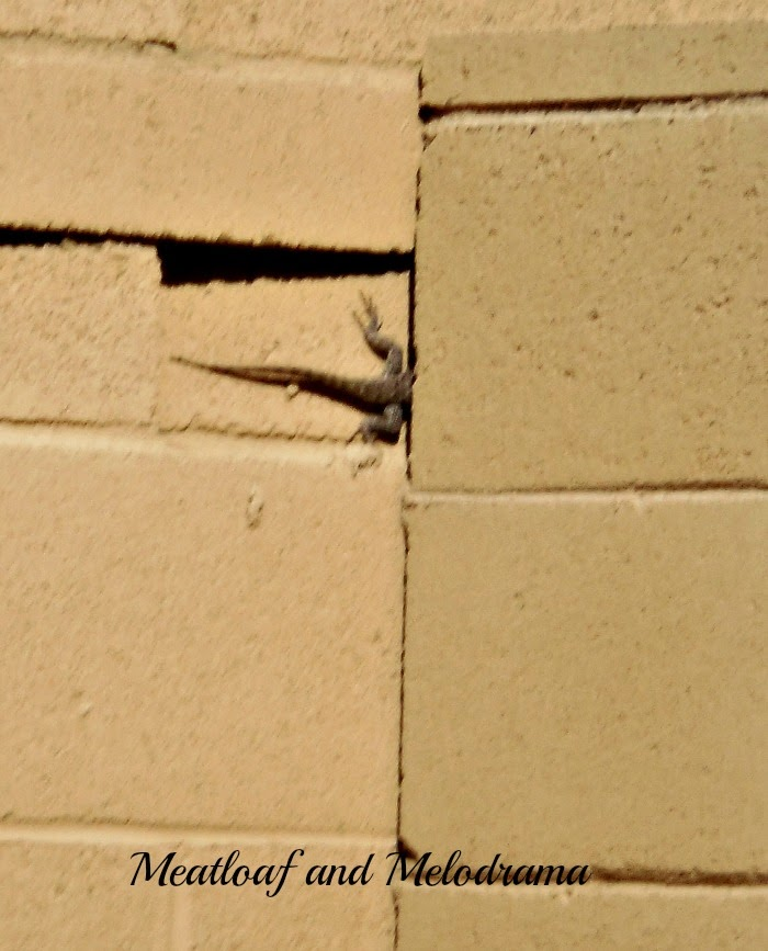 lizard tail peeking out from crack in fence