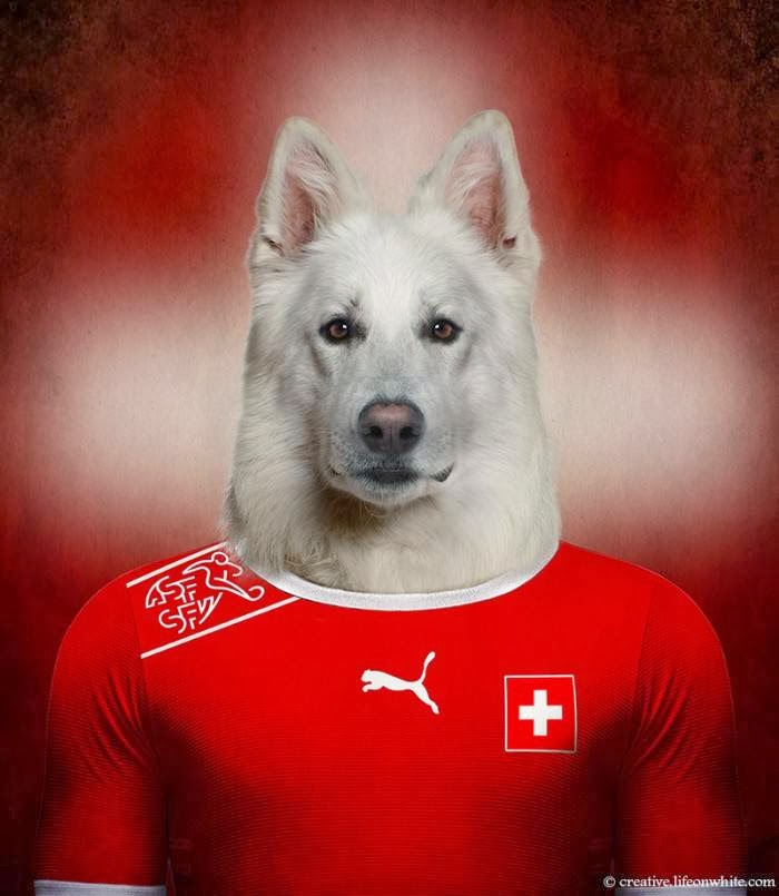 Switzerland – Swiss White Shepherd
