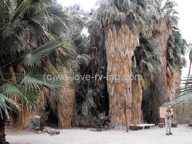 The tall trees of the oasis at the Visitor Center