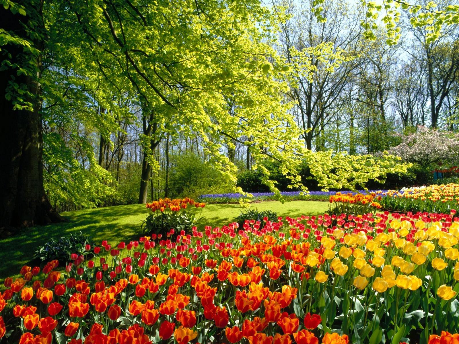 http://4.bp.blogspot.com/-Gh1kRzQVOEk/Tw_C72Y9W5I/AAAAAAAAE7U/XNk7iUMlL4I/s1600/Keukenhof+Gardens%252C+Holland.jpg