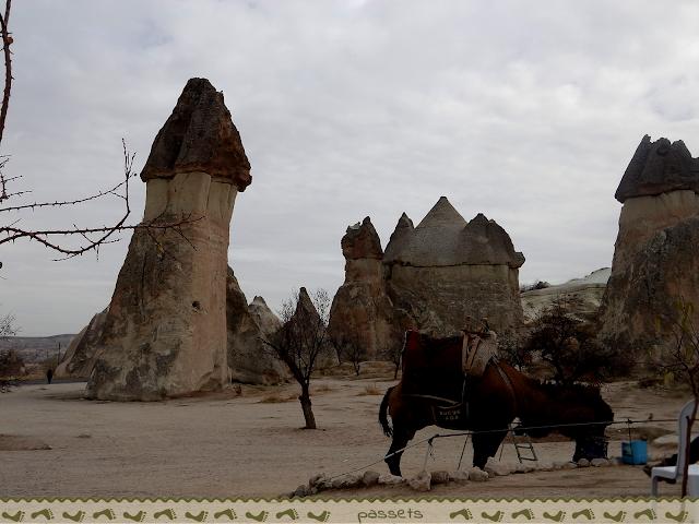 Paseo en camello Turquia