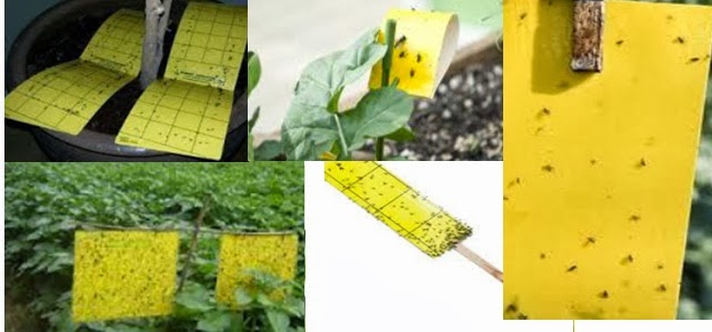 Natural Way To Kill Gnats In Plants