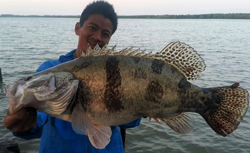 Big fishes of the world perch chinese siniperca chuatsi for Sea perch fish
