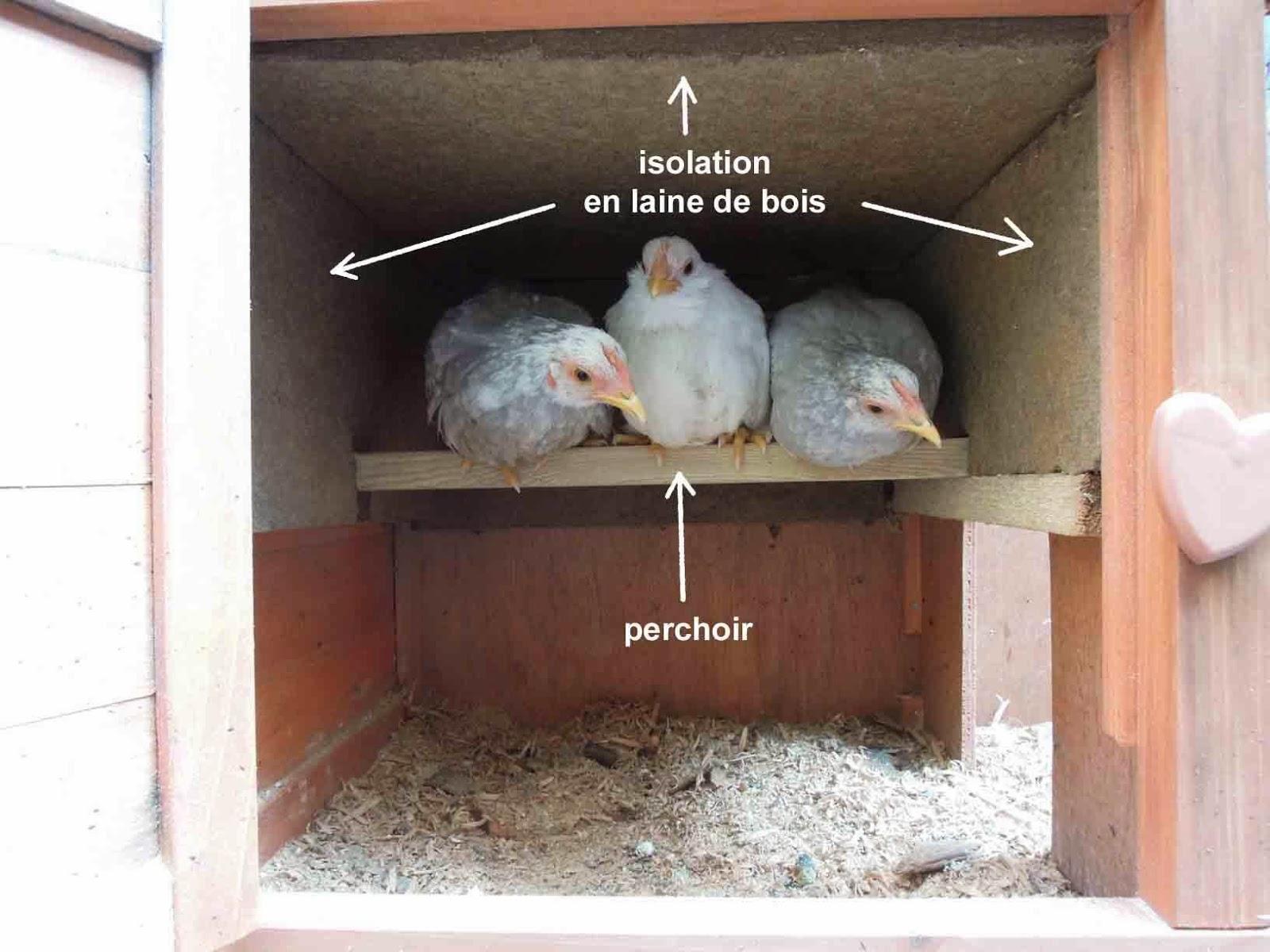 L'abris-pour-les-poules