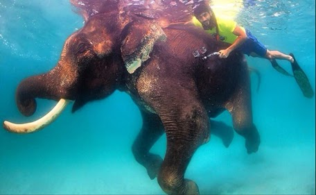 UAE, Hamdan, Elephant, Diving,
