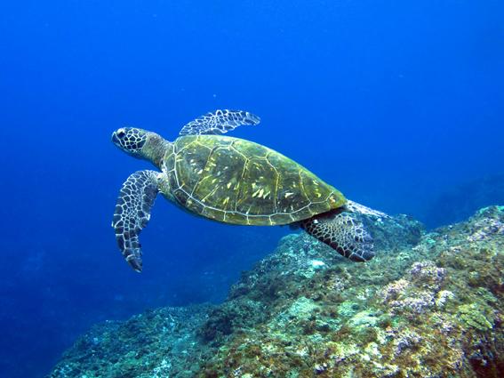 「八丈島 ダイビング 」の画像検索結果