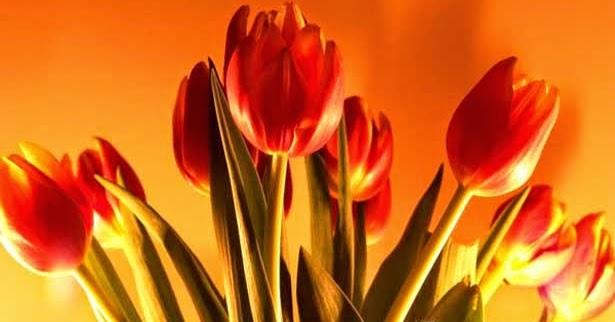 Yolanda Struktur Bunga Tulip