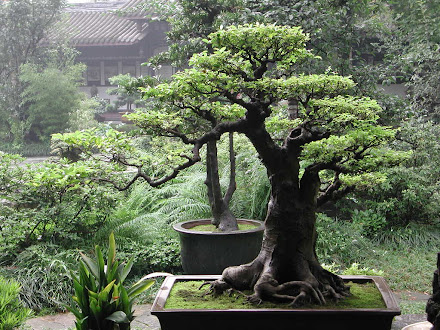 Mastering the Art of Bonsai