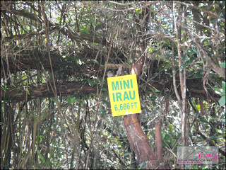 Mossy Forest - Gunung Irau