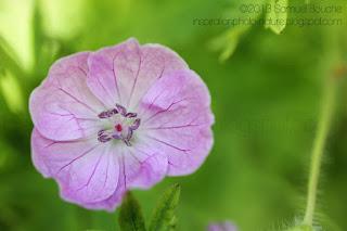photo de la flore dans un jardin en fleur photo macro florale