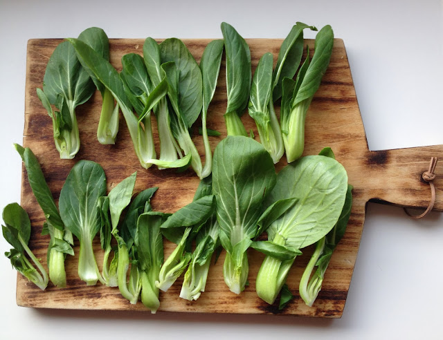 Baby Bok Choy - Meatless Mondays || Tastes so Good Blog