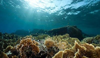 Kenali kondisi bawah air tempat Agan akan menyelam dan mengambil foto