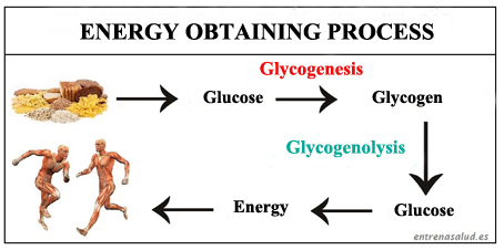 Glycogenesis and glycogenolysis processes