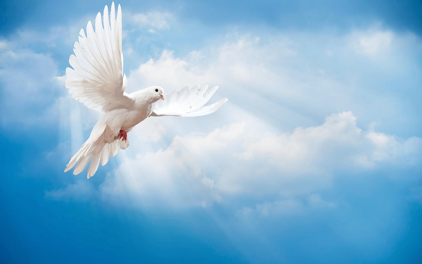 Foto van een witte vredesduif in de wolken