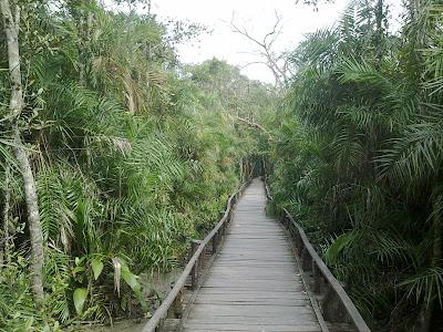sundarban forest Bangladesh
