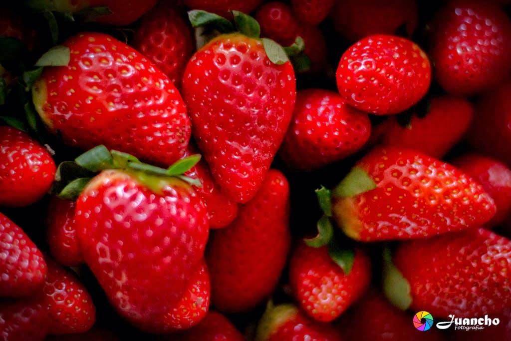 Fresas Rojas