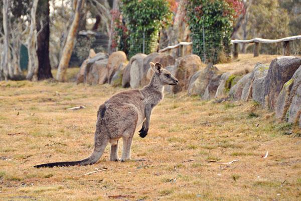 providence park  kangaroos
