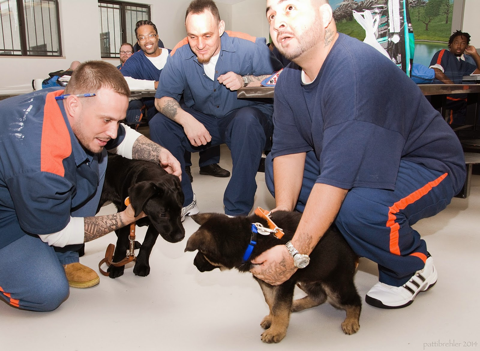 There are three men in the foreground dressed in blue prison  uniforms. The one on the left is kneeling on his right knee and is holding a black lab puppy back from reaching toward a smaller german shepherd puppy being held by a man on the right, he is squatting down and looking up toward someone out of range of the camera to the left. Both puppies have their feet on the painted cement floor. A third man is sitting on a stool between the other two men and he is looking down toward the puppies. There are two men sitting down in the background.