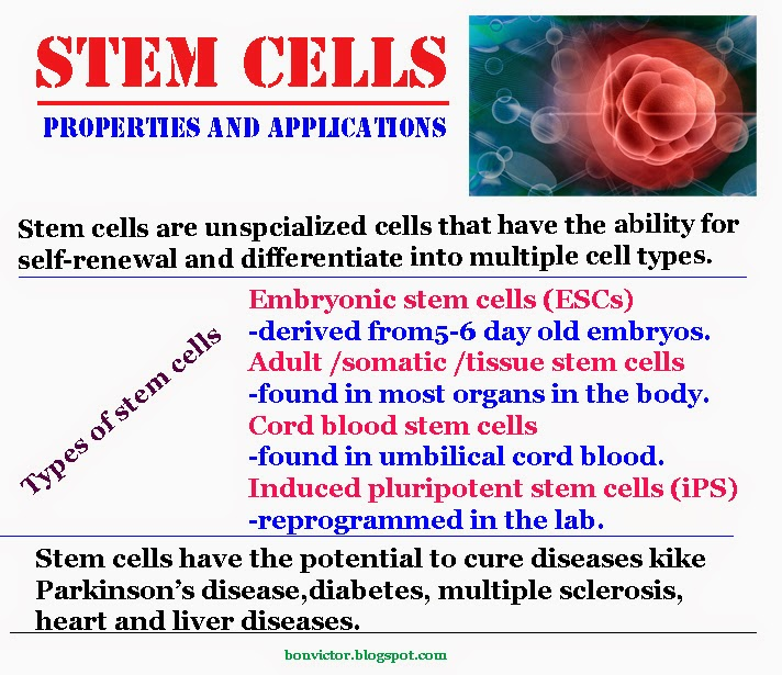 Stem Cells articles: The New England Journal of Medicine