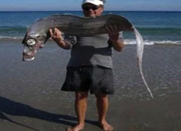 Ikan aneh ditemukan di pantai  Delray Florida