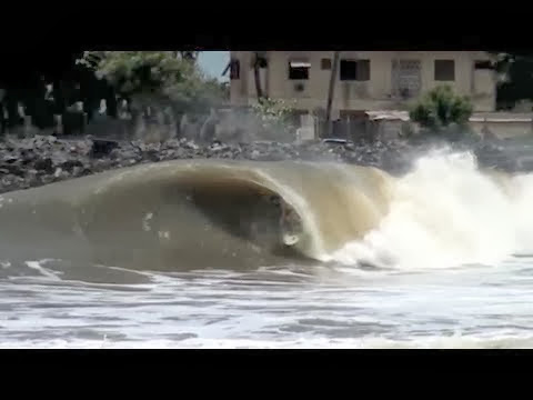 SURFER - Nigerian Wedge