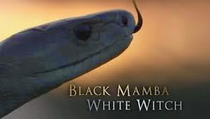 Black Mamba White Witch - In the small African kingdom of Swaziland, the black mamba is a snake both feared and revered.