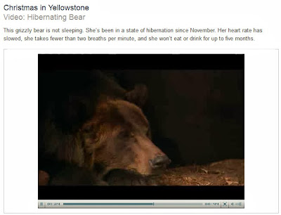 http://www.pbs.org/wnet/nature/episodes/christmas-in-yellowstone/video-hibernating-bear/4454/