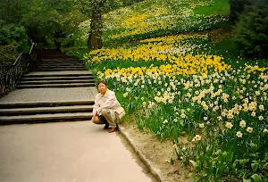 """花,花,没有一寸土地不开满了各色各样的花。岛上有活着翩飞的""""蝴蝶博物馆"""",美极了,但不准拍照和摄影。"""