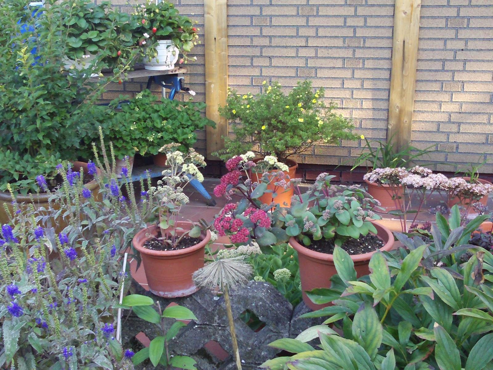 terrasse gestalten mit k belpflanzen erdbeeren gartenelfe. Black Bedroom Furniture Sets. Home Design Ideas