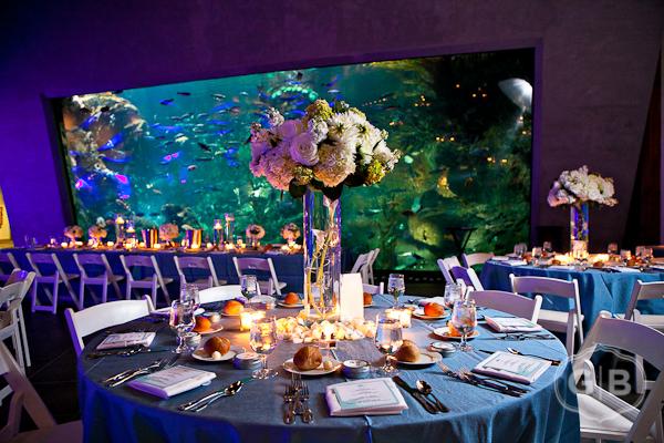 A Wedding At The Seattle Aquarium Flora Nova Blog