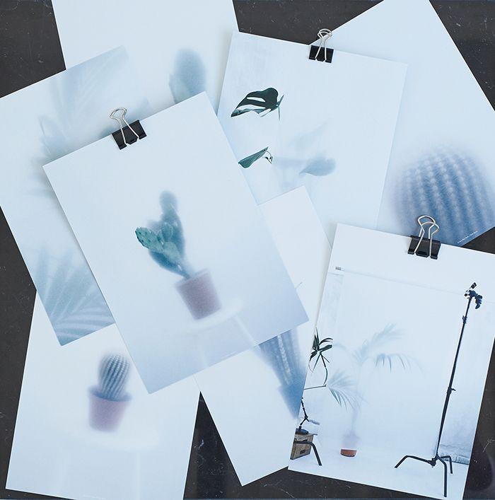 Kristina Dam leger med foto og kaktusser