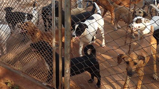 Animais mantidos na APAISA (Foto: Arquivo)