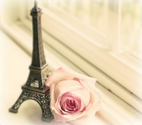 rosa+e+a+torre+de+paris.jpg (500×440)