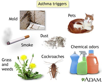 Can A Dog Have Asthma Attacks