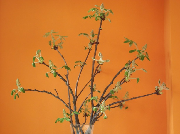 Chesnut branches in a vase