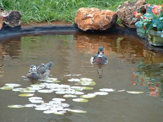 Gardening in africa building a wildlife pond - Build pond wildlife haven ...