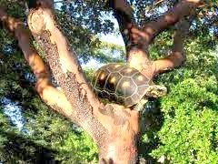 a fabula do jabuti na árvore