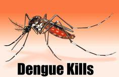 Dengue Kills