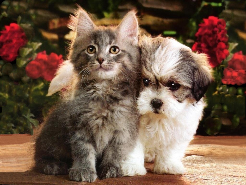 Kitten and puppy picture kitten and puppy picture cool kitten and