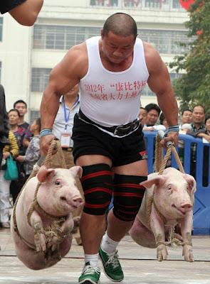 babi besar