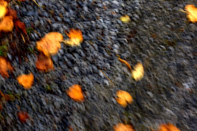 abstract image of leaves on the ground